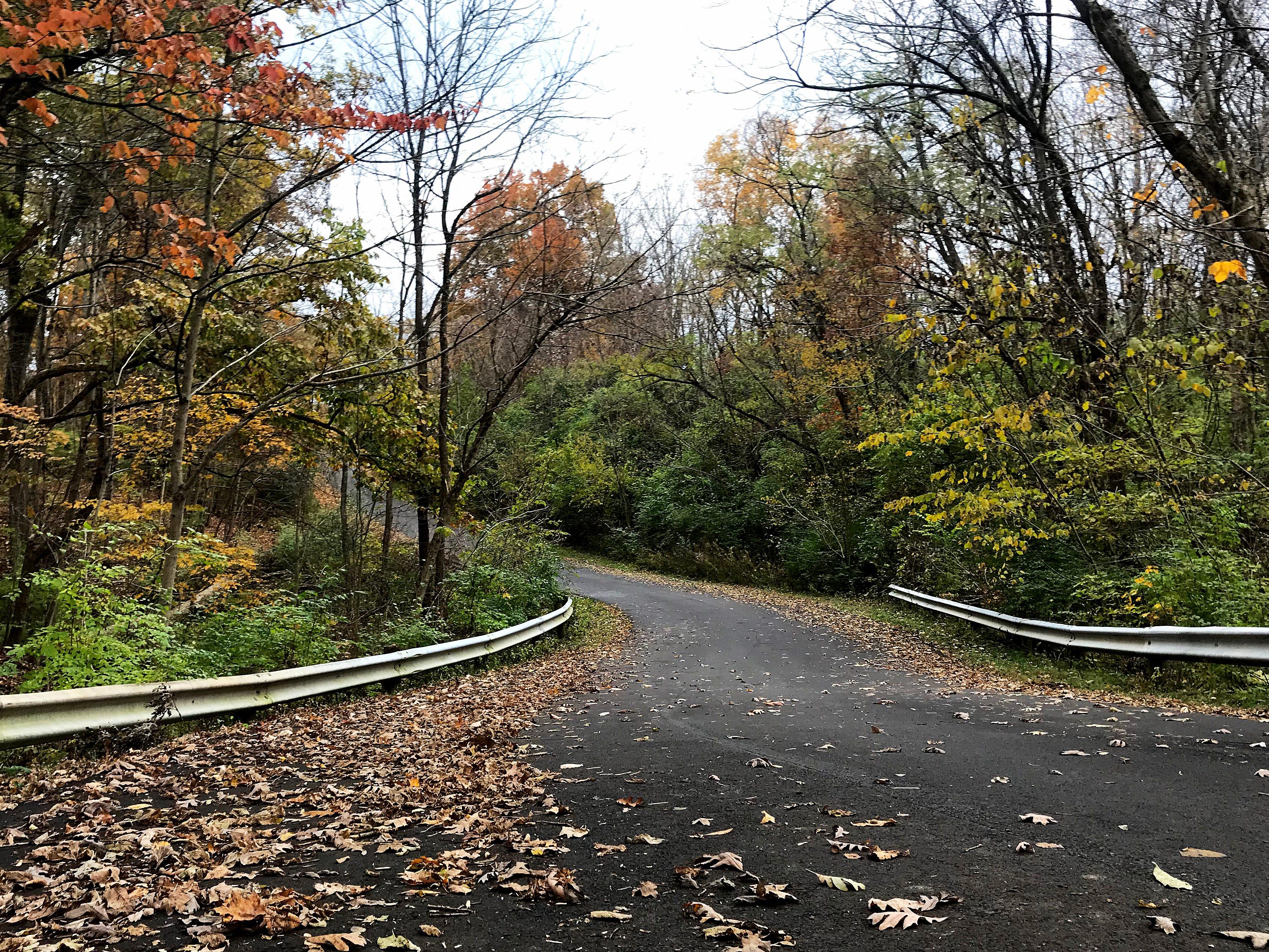 Fall colors are vivid at  Winton Woods Park Sunday, November 4, 2018.
