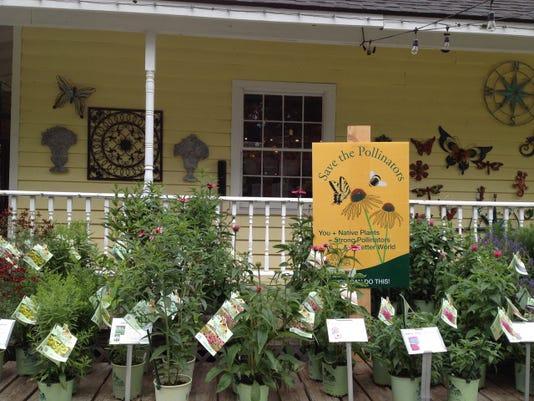 Save Pollinators Img 0845