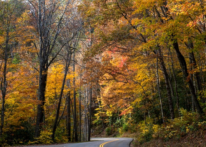 Fall foliage surrounds Little River Gorge Road in the Great Smoky Mountains National Park on Nov. 4.