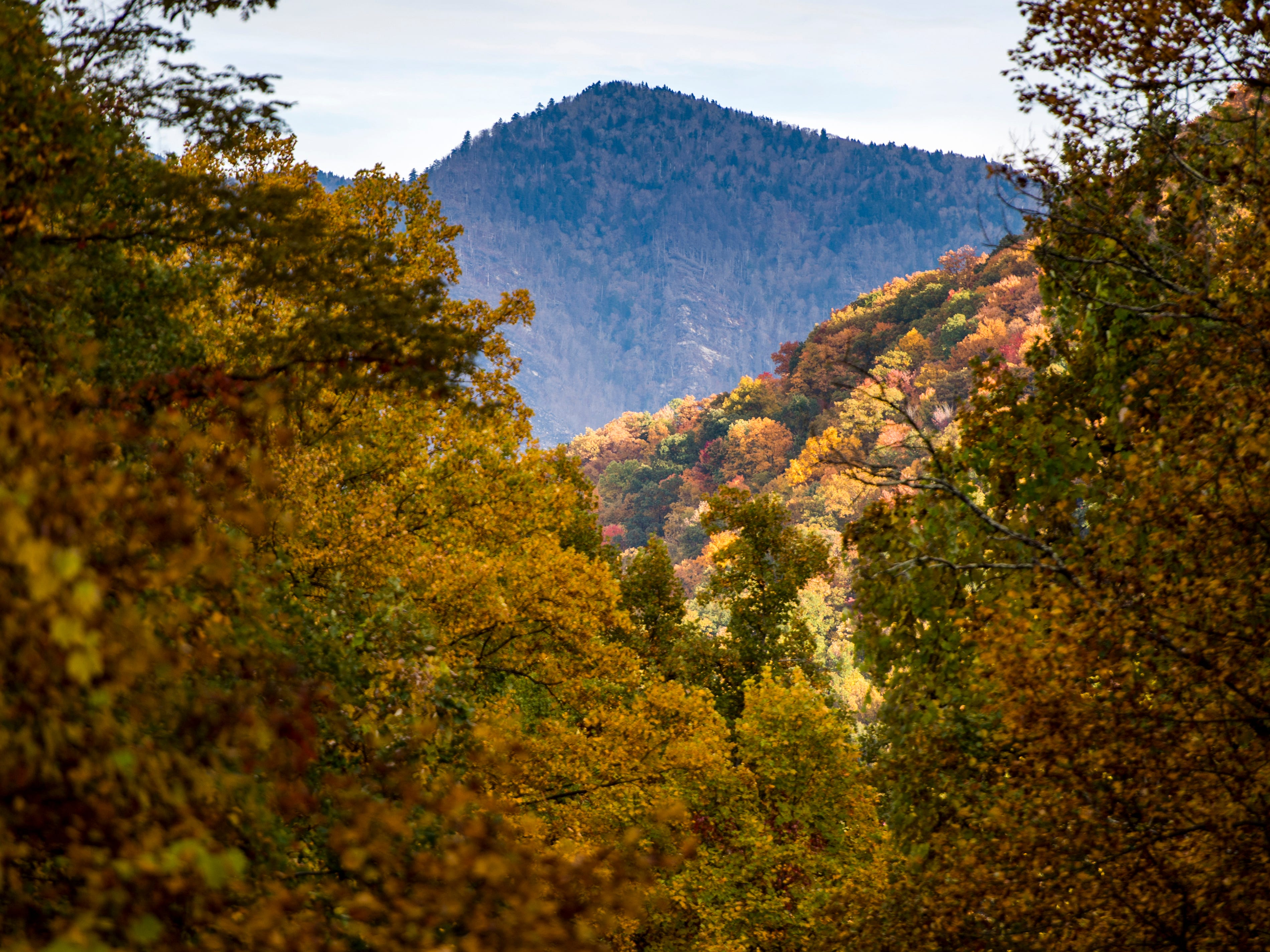 Fall foliage in the Great Smoky Mountains National Park on Sunday, November 4, 2018.