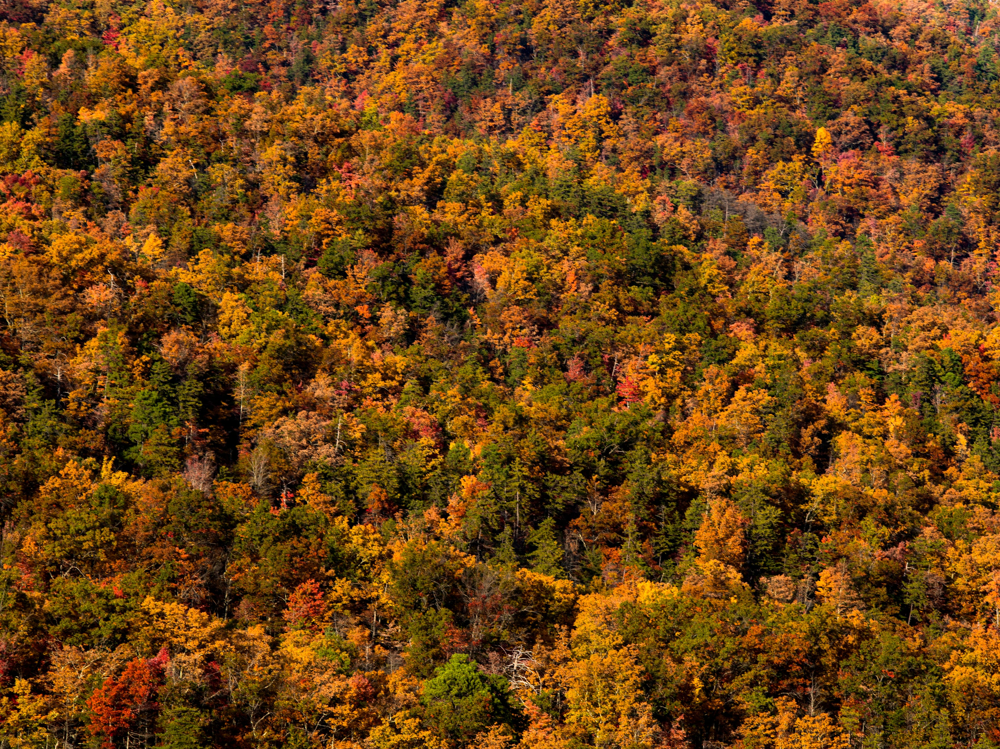 Fall foliage along Fighting Creek Gap Road in the Great Smoky Mountains National Park on Sunday, November 4, 2018.