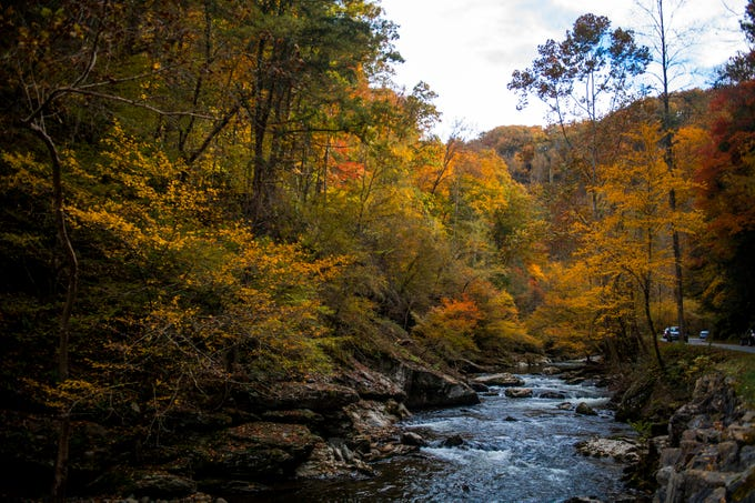Fall foliage surrounds the Little River in the Great Smoky Mountains National Park on Sunday, November 4, 2018.
