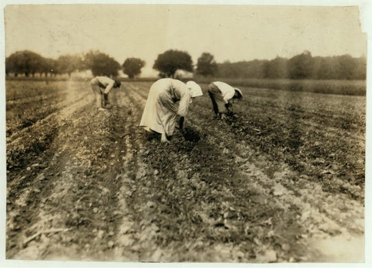 Slovaks blocking and thinning beets near Corunna, Michigan, in 1917.