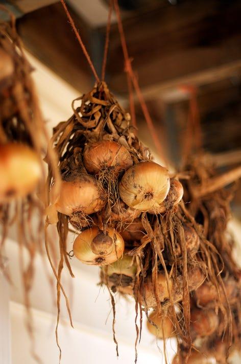Onionsdrying