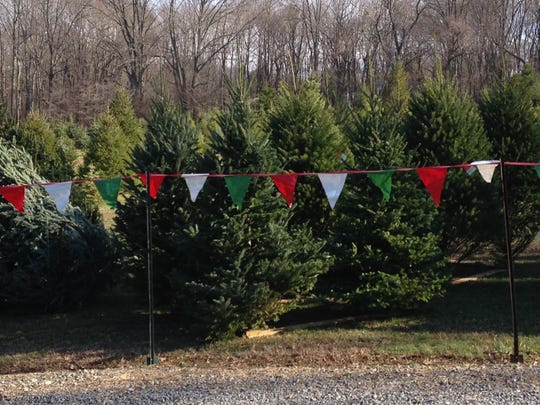 Cut-your-own New Jersey Christmas Tree