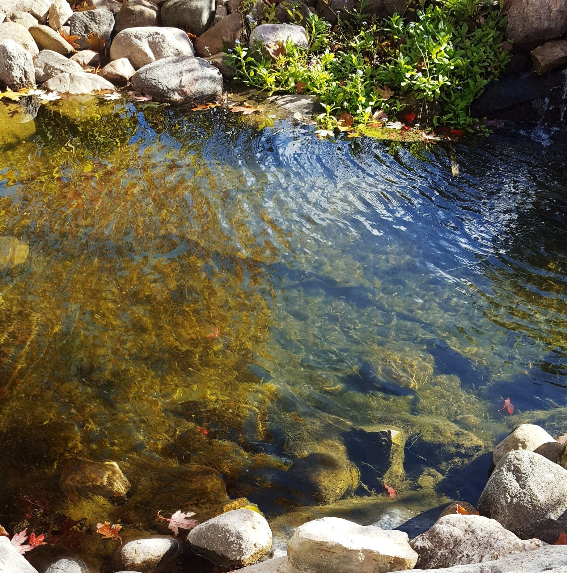 Get Up and Grow: Time to get your ponds ready for winter