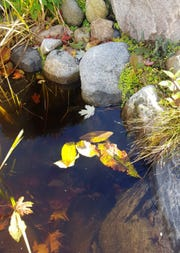 Ornamental ponds can be a nice addition to landscape areas.