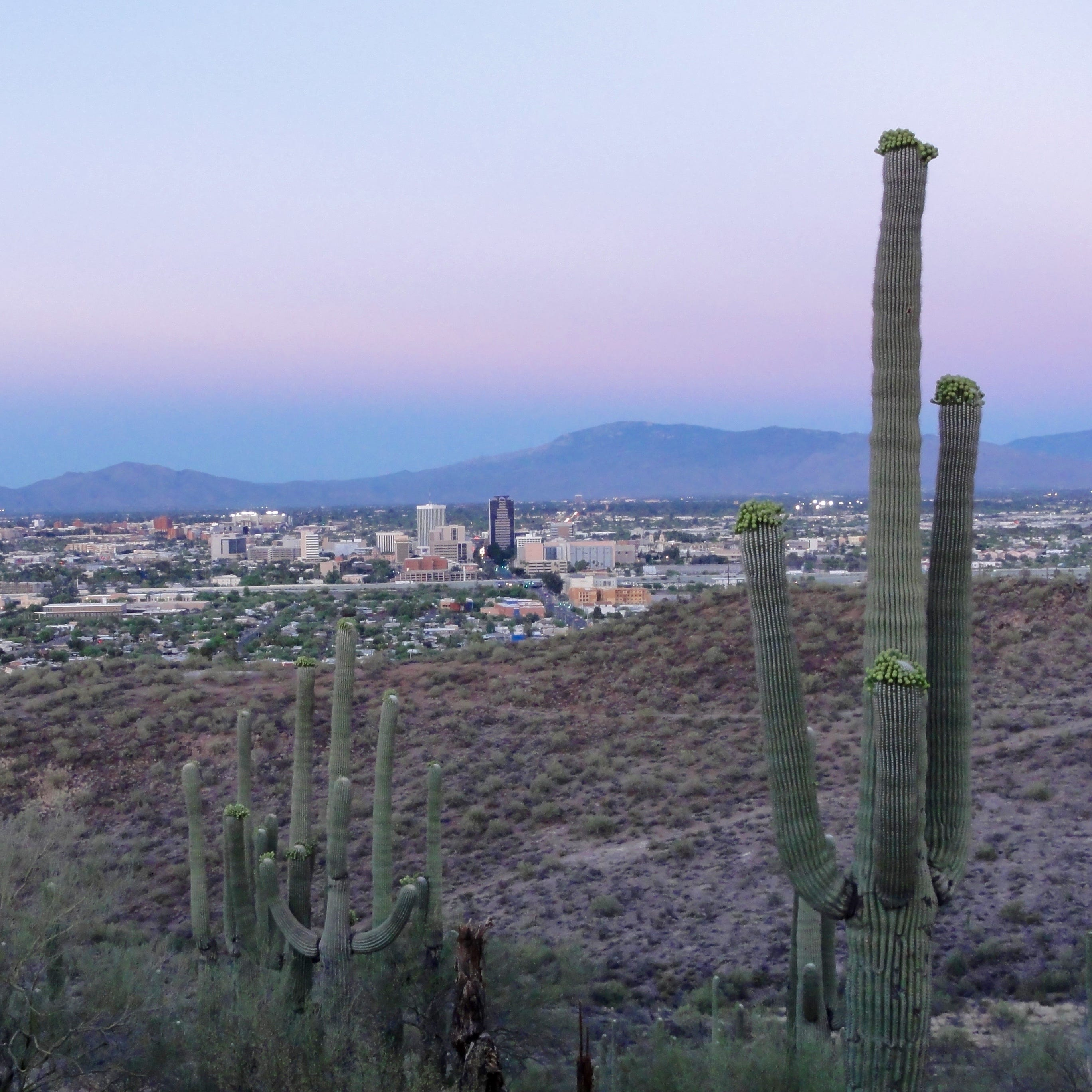 How Tumamoc Hill, a Tucson hiking hotspot, balances its popularity with preservation
