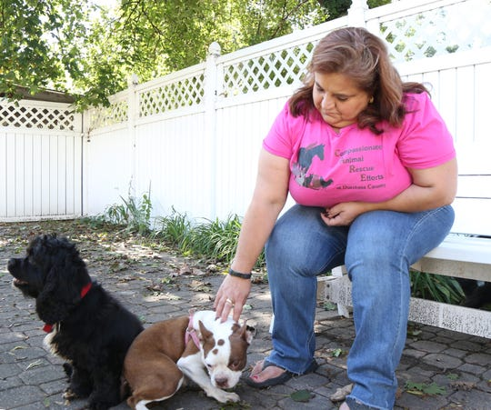 Stefani Timpano reaches to pet Millie, a dog she is fostering at her home in the City of Poughkeepsie on October 12, 2018. Stefani is a volunteer for Compassionate Animal Rescue Efforts of Dutchess county. Millie had been surrendered to a shelter by a breeder and was brought to dutchess county to find a new home.