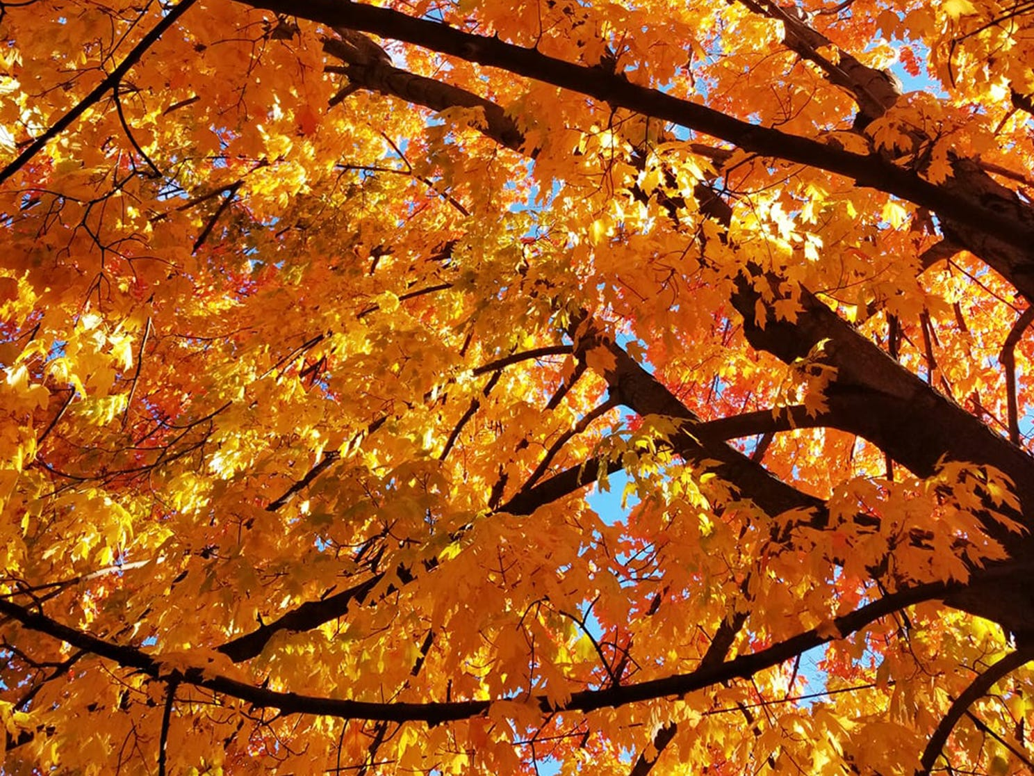 Jess Lynn Hill shot these leaves on Hill Street in York