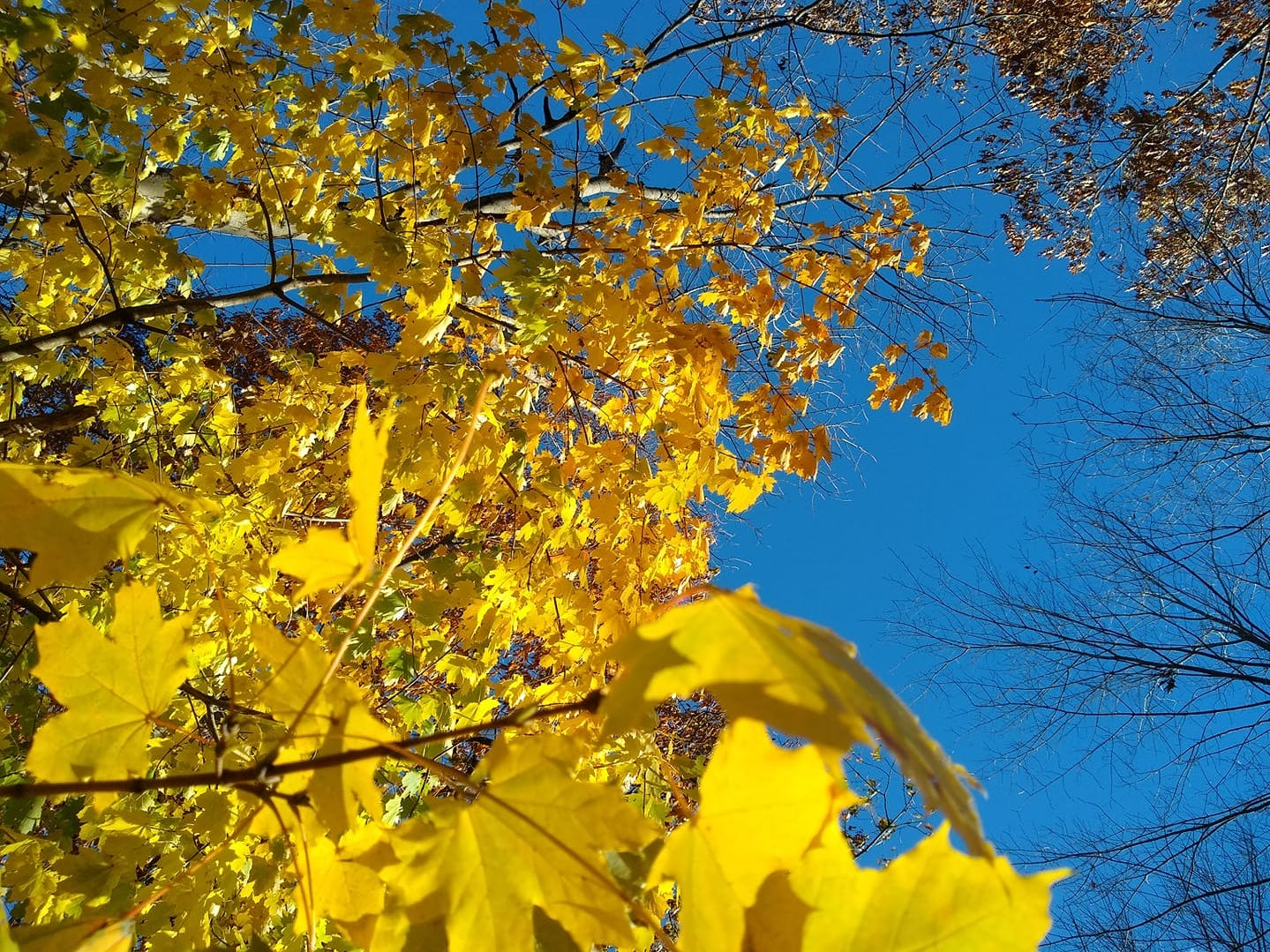 Blue sky and yellow leaves at Lake Redman Saturday.