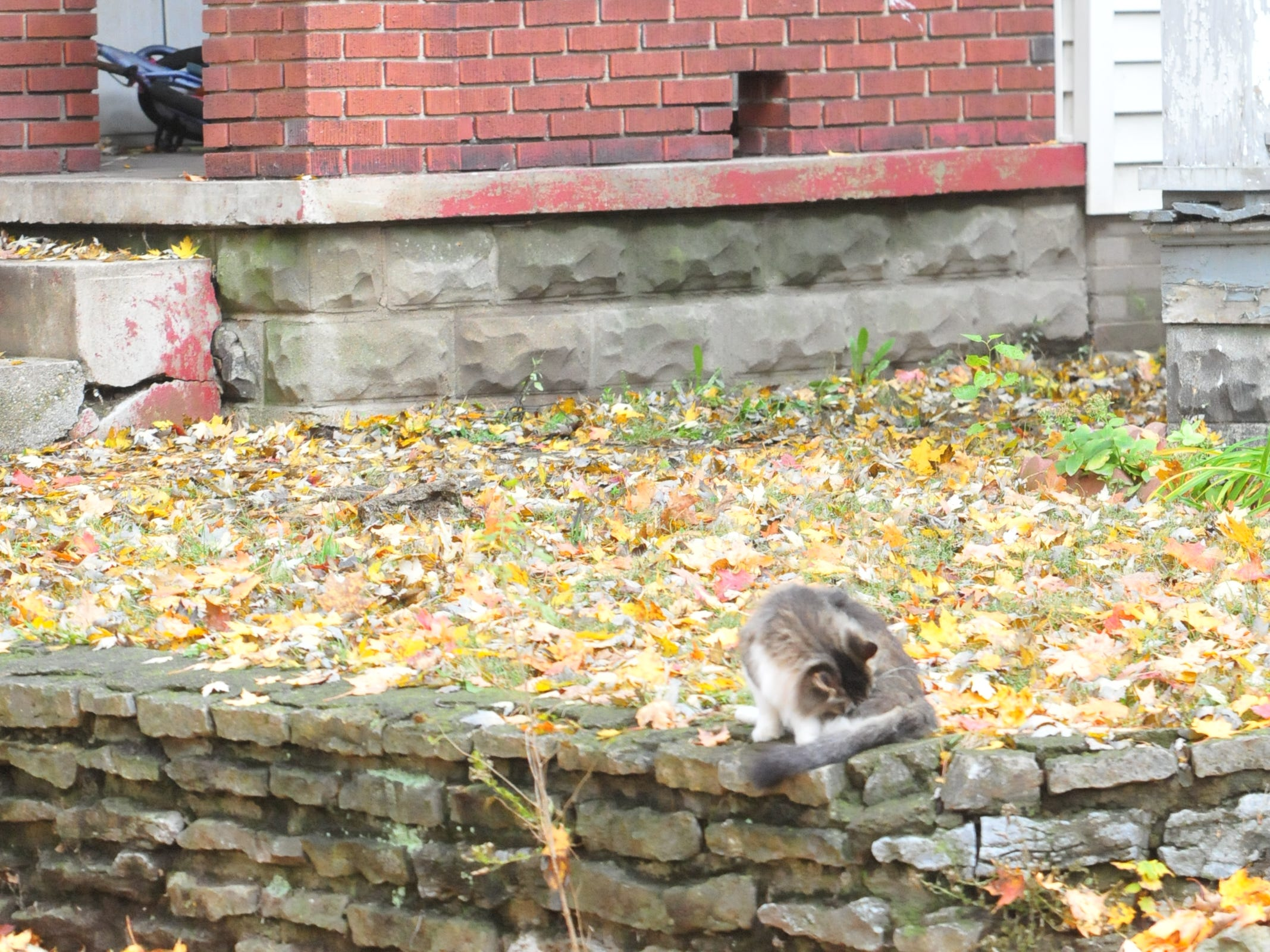 A cat pays no attention to a SWAT raid Monday at 219 N. 16th St.