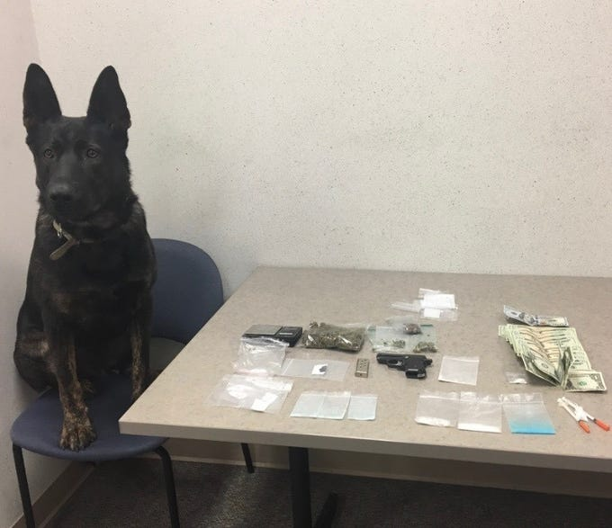 Agar, a Wayne County Sheriff's Office K-9, sits near items confiscated Friday after Agar alerted to the presence of narcotics in a vehicle after a traffic stop.