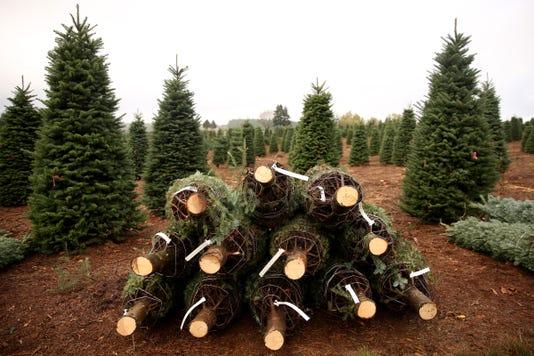Christmastreefarm Ar 05