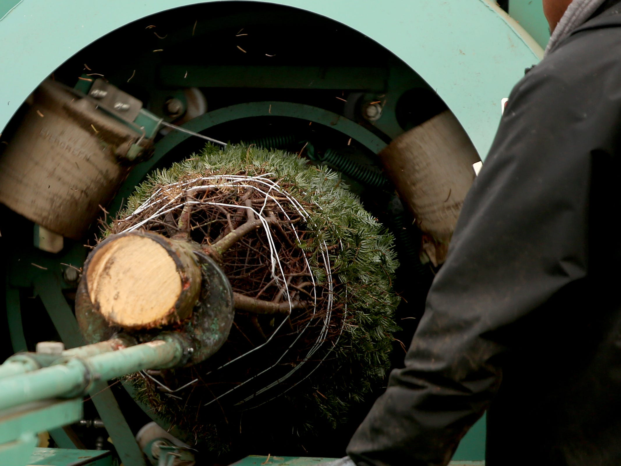 A Christmas tree goes through a baler at Hupp Farms near Silverton on Monday, Nov. 5, 2018.