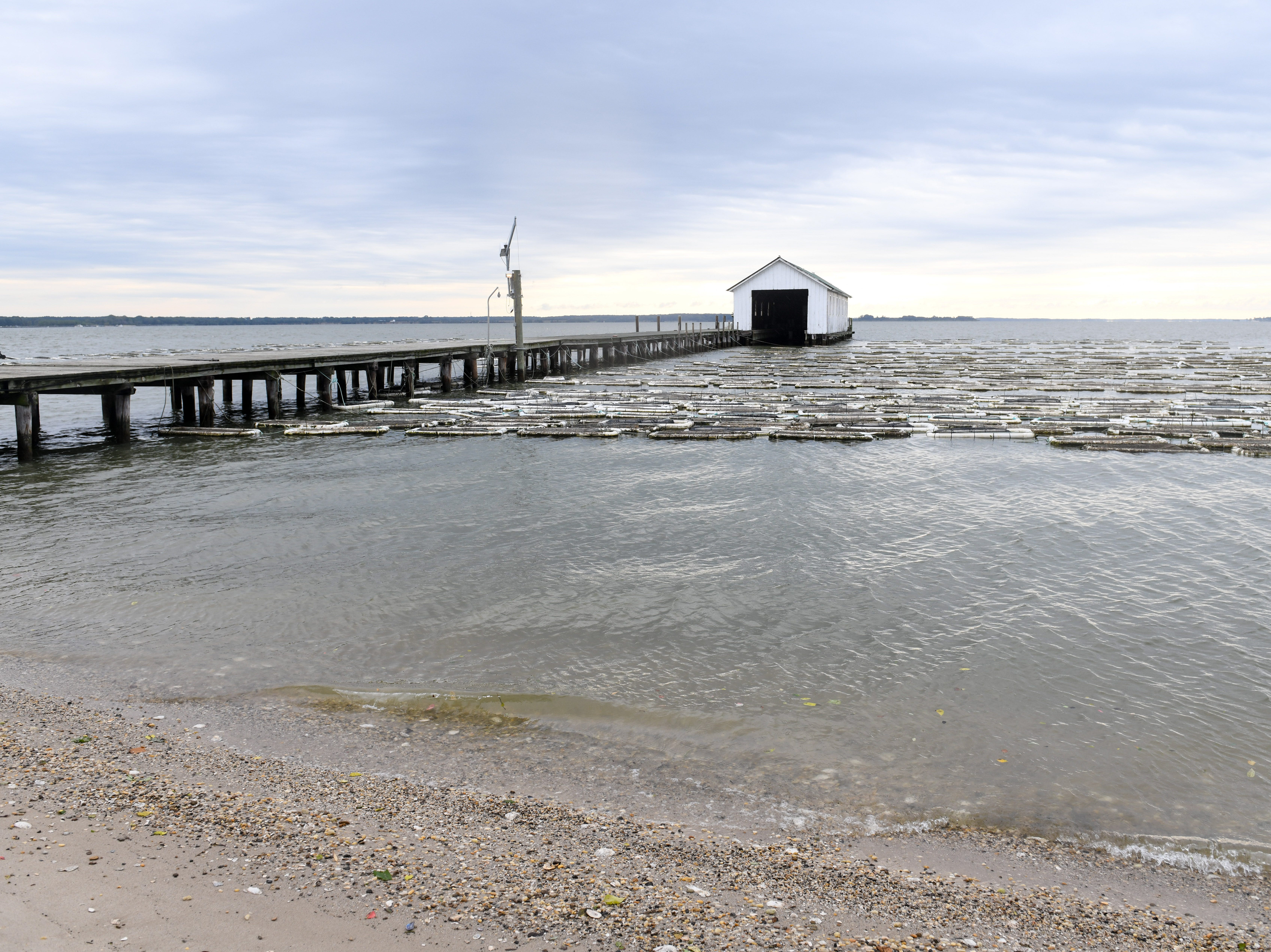 Oyster floats handmade by the Choptank Oyster Company sit on the surface of the Chesapeake Bay near Cambridge on Thursday, Sept 27, 2018.