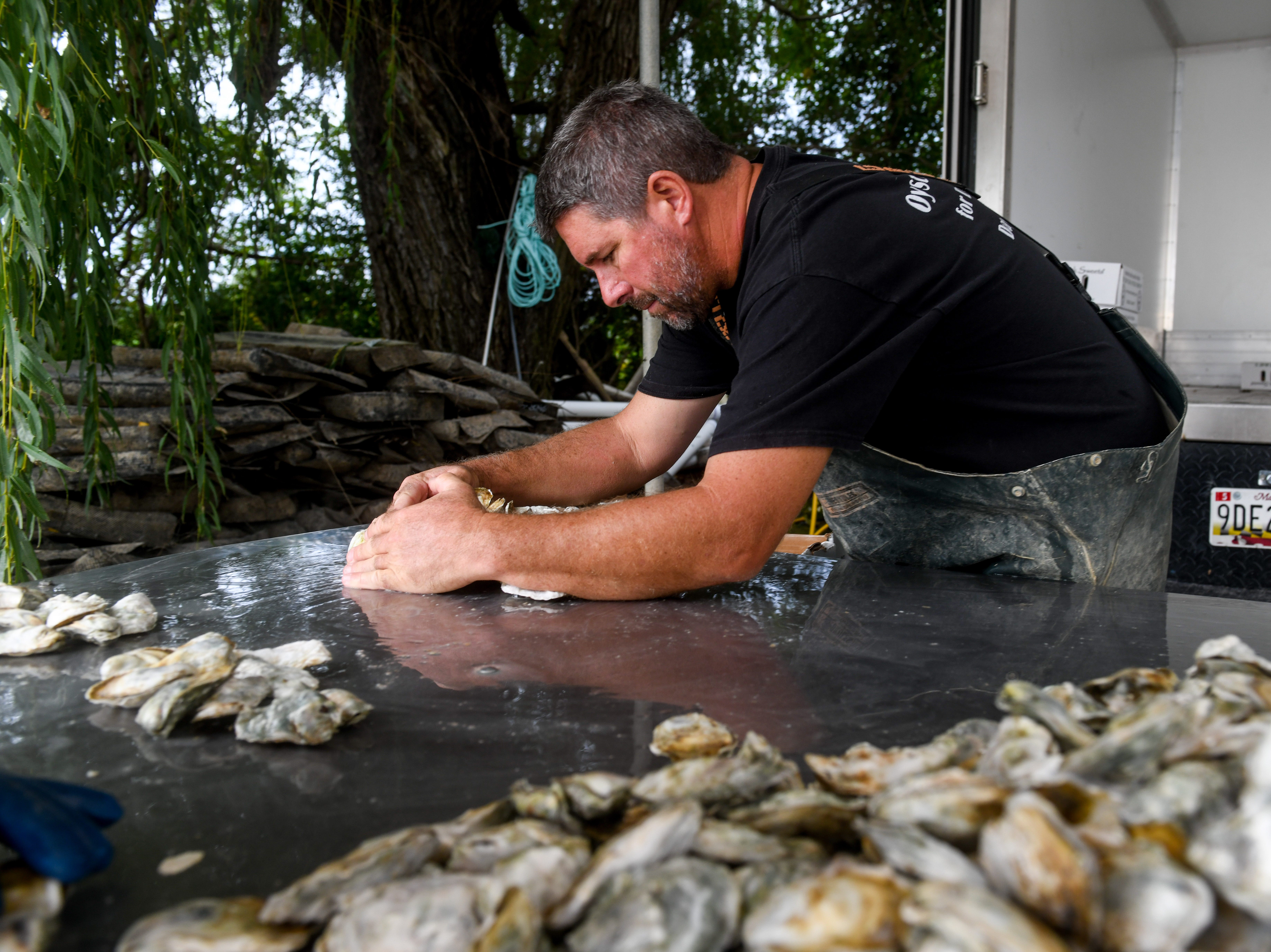 Choptank Oyster Company founder Kevin McClarren packages oysters on the shore of the Chesapeake Bay near Cambridge on Thursday, Sept 27, 2018.