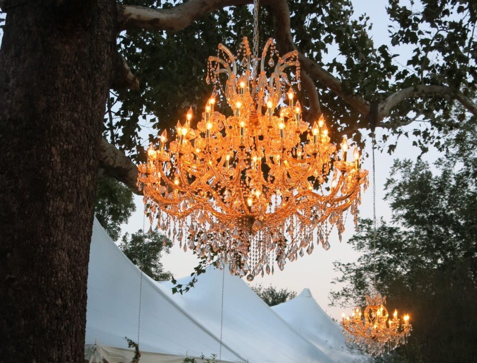 Chandeliers hanging from humble sycamore trees lit the way for guests arriving at the wedding reception. More were inside the tent.