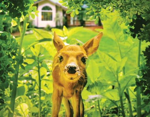 Backyard Wilderness Poster 3d Hq Smaller