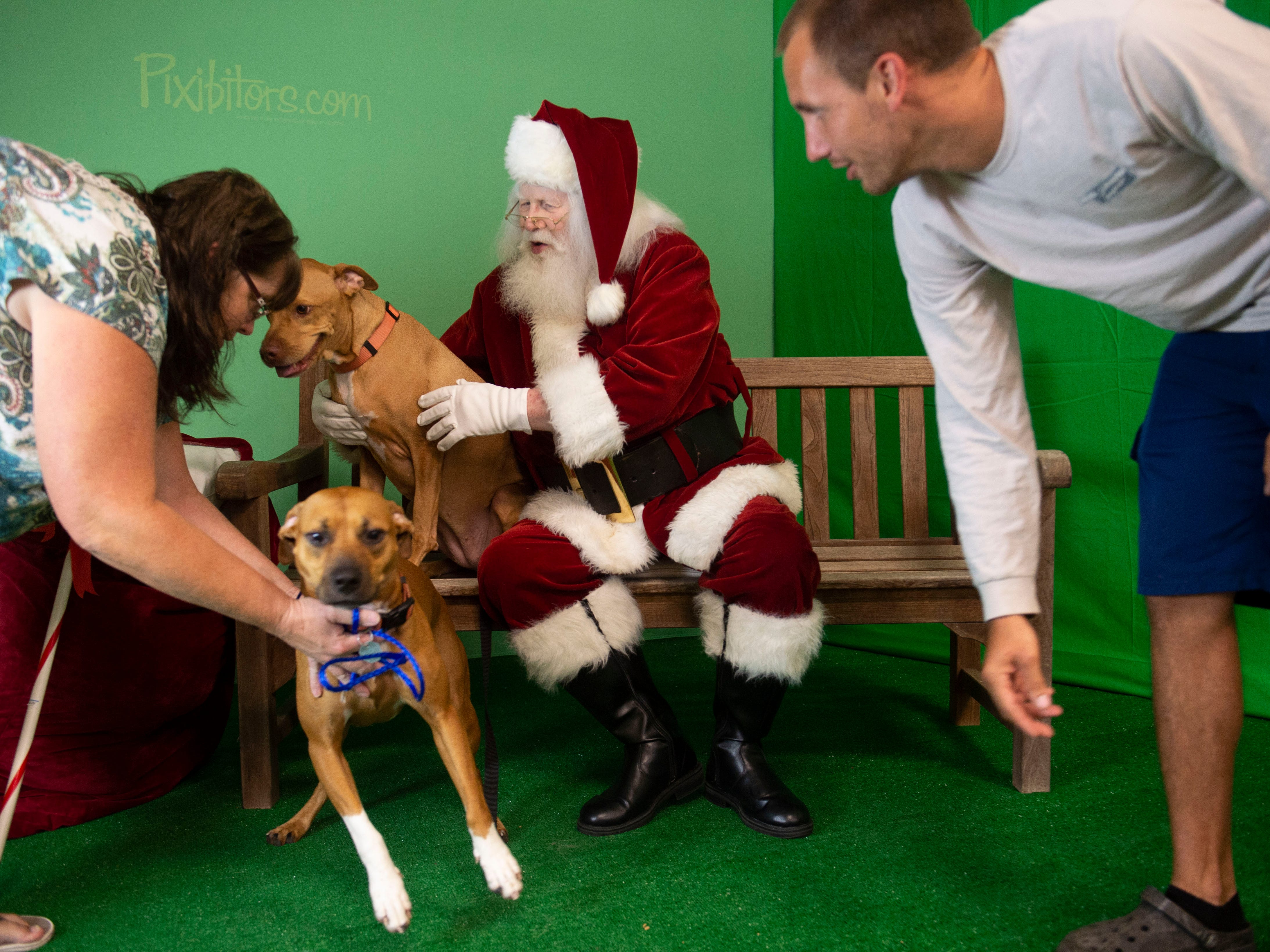 "Cheryl Selig and Brandon Selig, both of Vero Beach, try to get dogs Bella (left) and Sasha, to pose for a portrait with Lance Willock, dressed as Santa Claus, during the Humane Society of Vero Beach and Indian River County's annual Santa Paws photo shoot Sunday, Nov. 4, 2018 at the Humane Society Thrift Store in Vero Beach. Willock is used to meeting children during the holiday season, but enjoys greeting the animals and helping out with the fundraiser. ""They're different than children but they all have personalities. Once they get acquainted with Santa it's interesting to see how they all react to Santa, almost like children somewhat,"" Willock said."