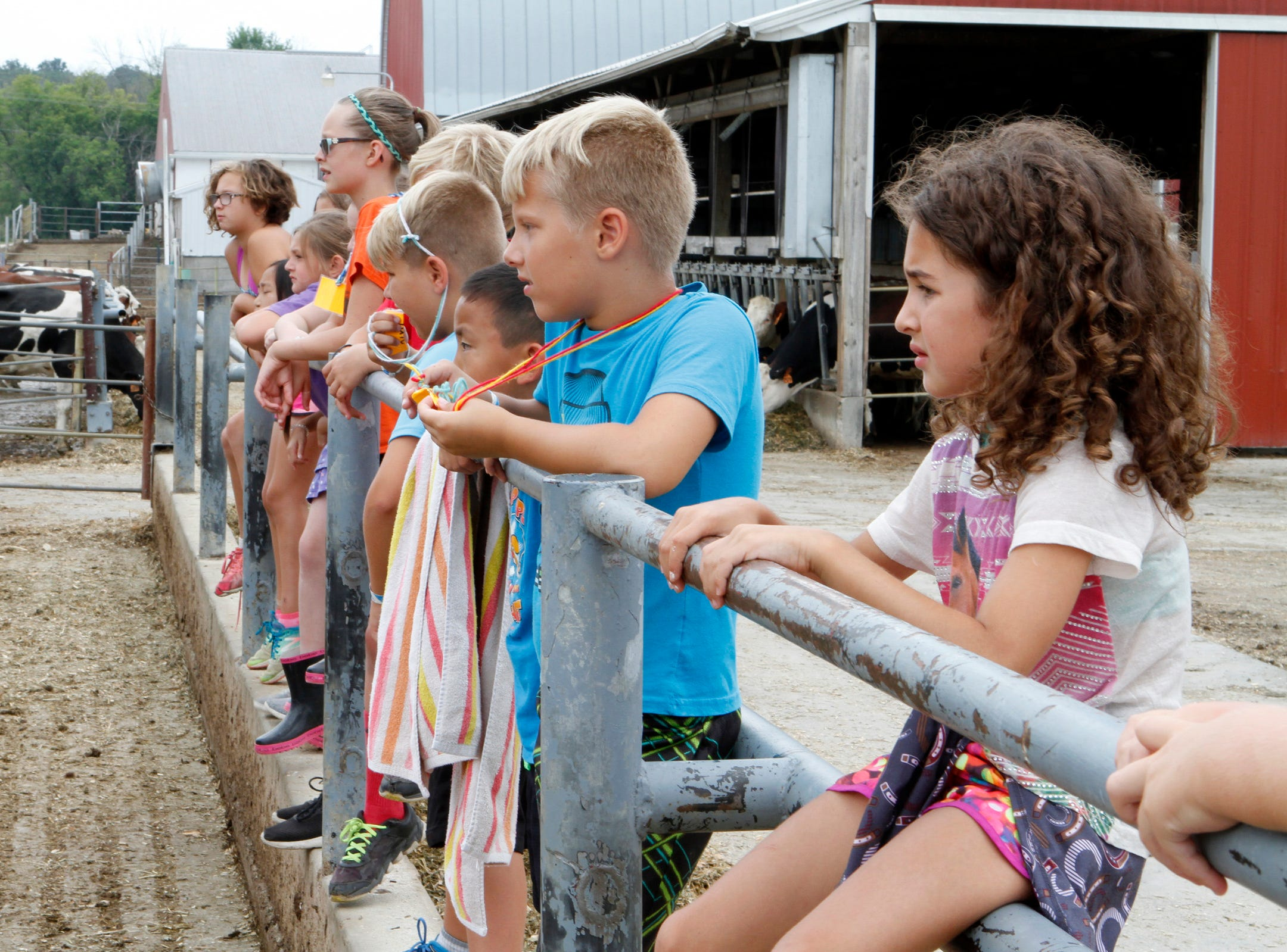 Participants at a farm camp at Roden Barnyard Adventures check out a newborn calf on Aug. 9.