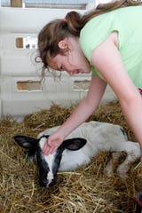 Correct animal handling starts the day the animal is born and continues for a lifetime.
