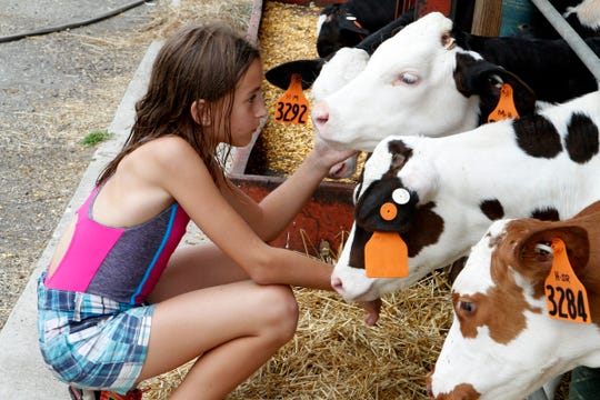 Taylor Wilke, 10, visits calves during a farm camp at Roden Barnyard Adventures on Aug. 9 in West Bend.