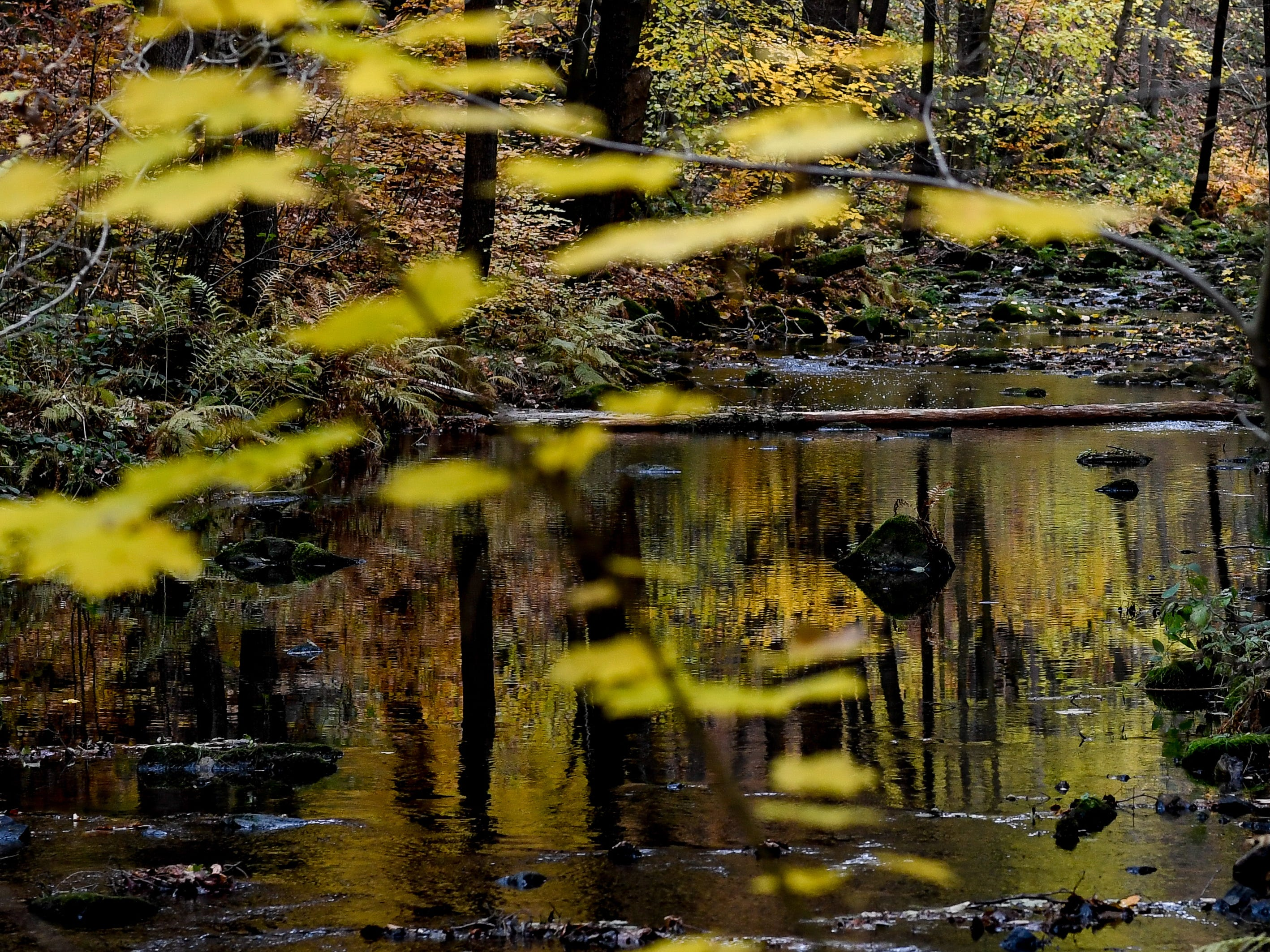 An autumnal colored forest in the Eastern Ore Mountains near Dippoldiswalde, Germany, Nov. 4, 2018.