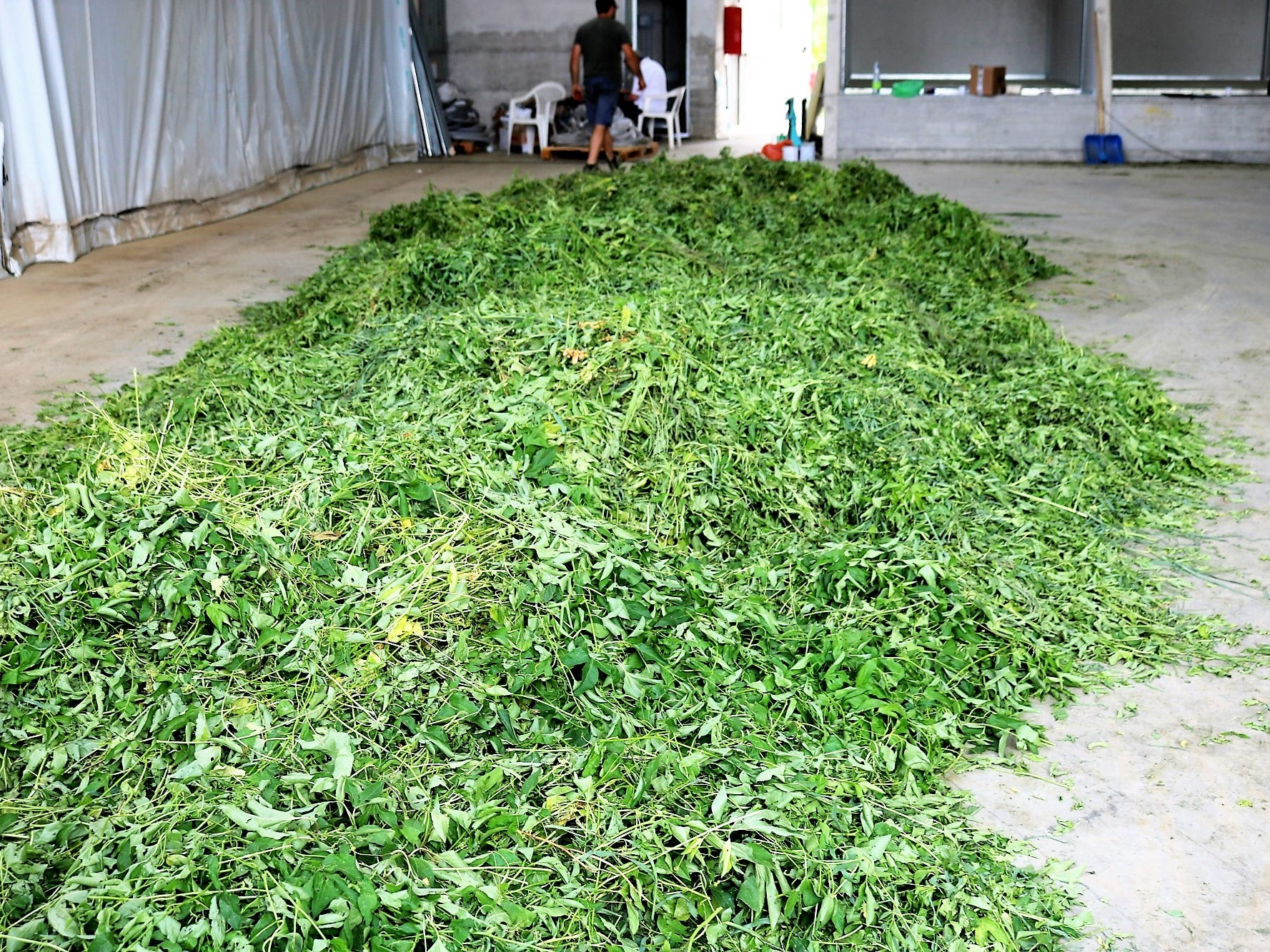 Once harvested, fresh botanicals are taken to the cooperative to be dried. The drying process takes one to several days with moderate heat, to avoid altering or ruining flavor. Dried botanicals will be stored until winter, at which point there's time to go back and process the botanicals for production.