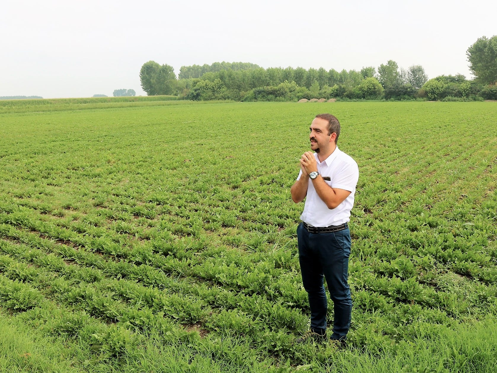 """Dandelion greens are native to the Piedmont region and can be found in salads and pastas from the region. """"This is fundamental for Martini,"""" Garneri says. """"If we take this out of Martini, it's a completely different thing. You cannot replicate it in other ways."""""""