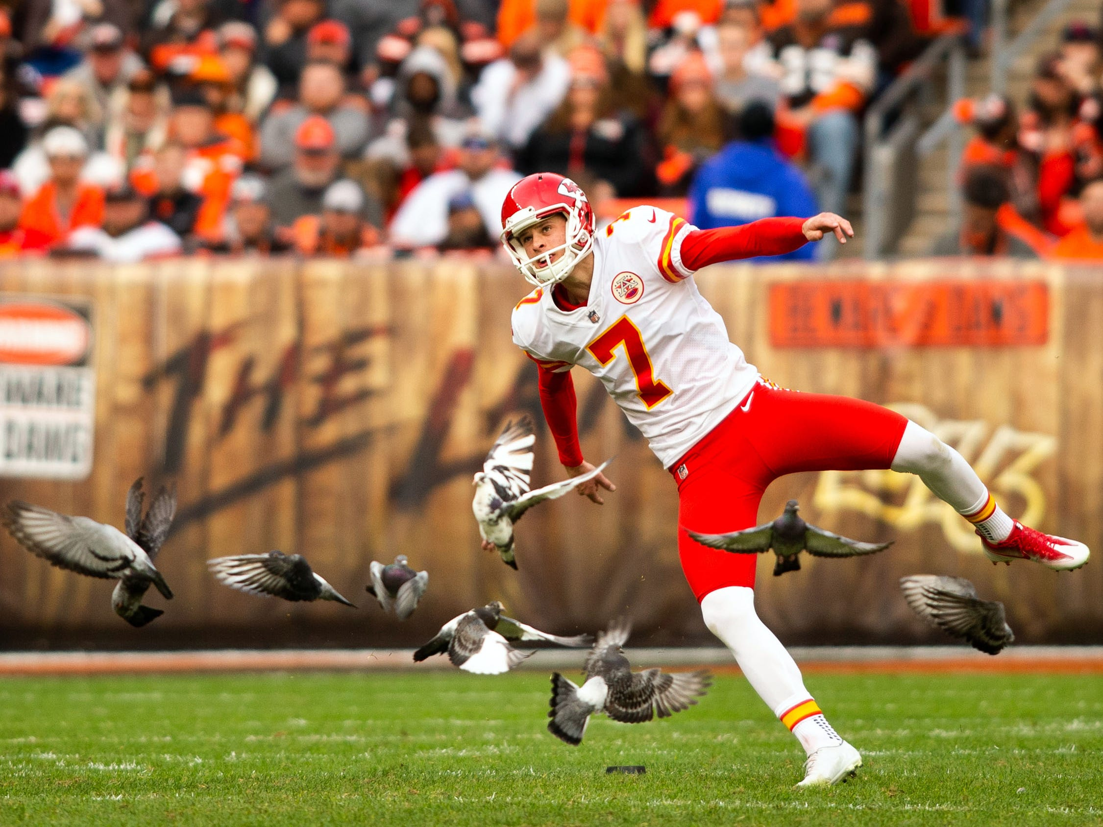 Week 9: A flock of pigeons fly away as Kansas City Chiefs kicker Harrison Butker kicks the ball to the Cleveland Browns during the fourth quarter at FirstEnergy Stadium. The Chiefs won the game, 37-21.