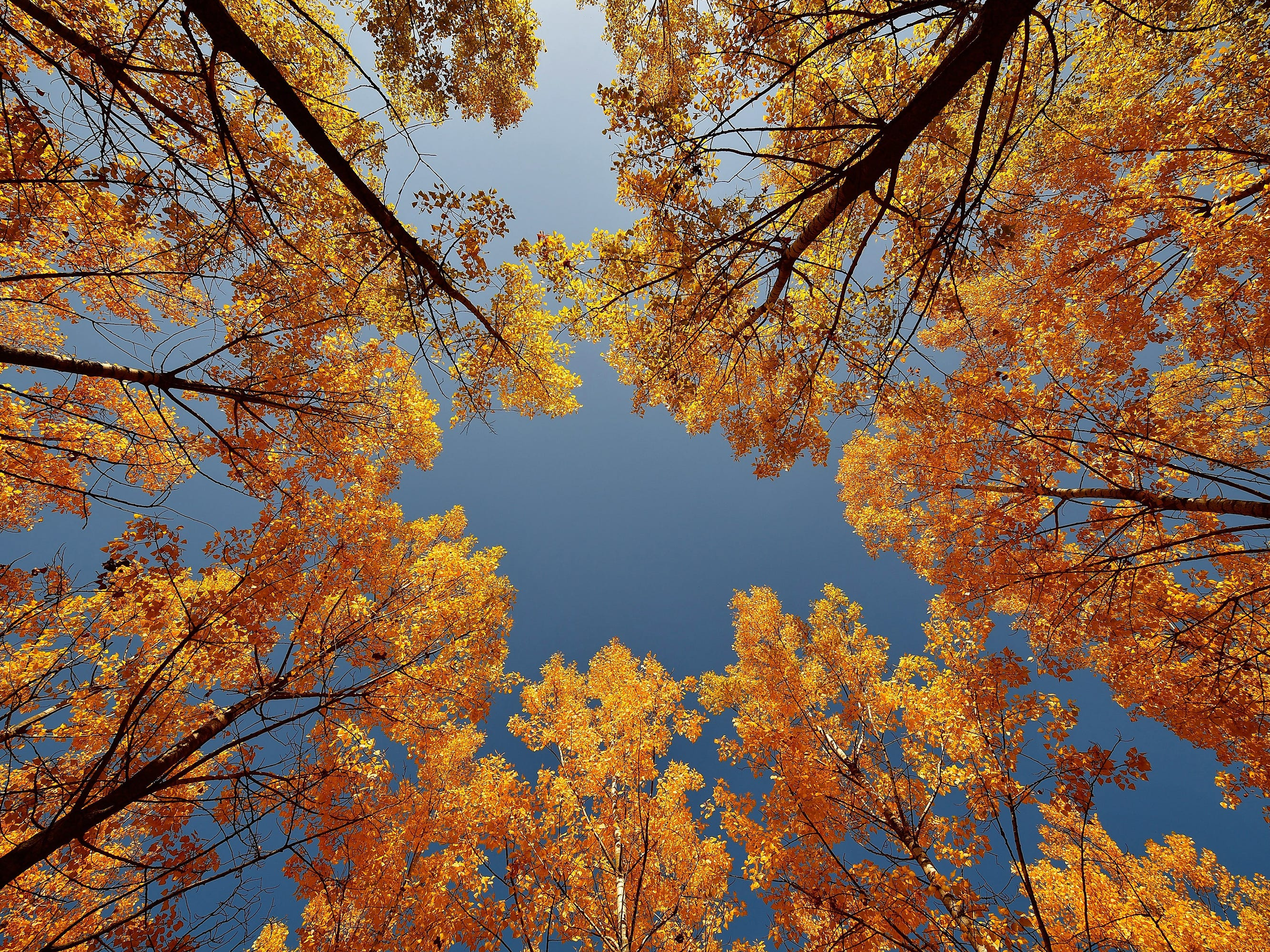 Trees in autumn leaf colors are pictured on a sunny day in a forest in Nyiregyhaza, Hungary, Oct. 9, 2018.