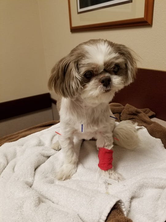 A year ago Coco was diagnosed with a Pyloric tumor.