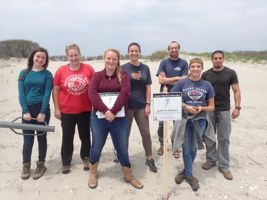 Amber Lindsay, left, joins RVCC students, Kristen Greaney, Jessica Yohn, Samantha Naulty, William Grosch and Morgan Hubert, and Dr. Ryan Rebozo of Pinelands Preservation Alliance, installing protective beach fencing at Island Beach State Park.