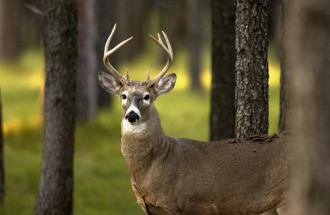 While hunting may seem at odds with many people's concept of conservation, it is in fact a crucial part of the state's wildlife management efforts.