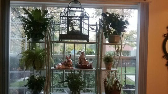 Repotting plants can help them get through the winter inside.