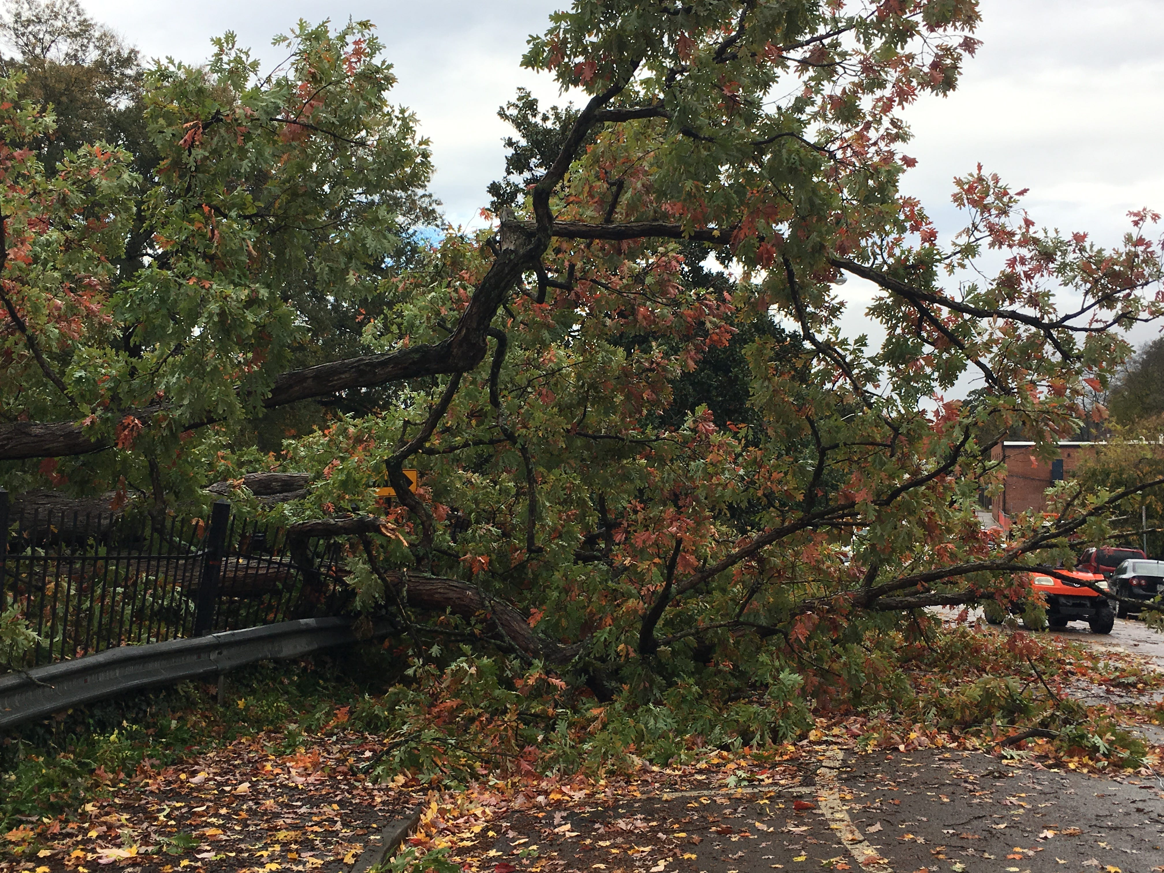 A tree inside the Old Gray Cemetery spills over onto Tyson Street after falling during the Nov. 5 evening storm
