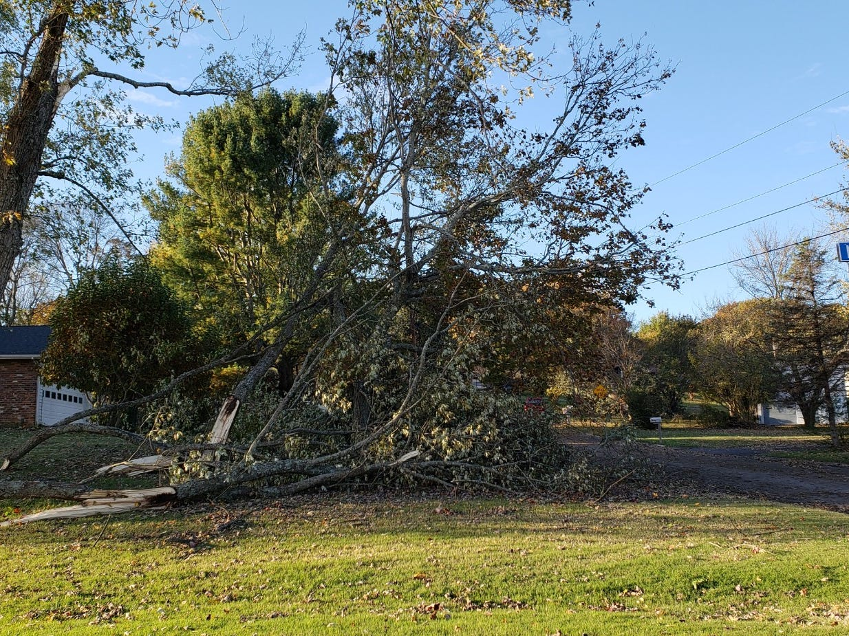 Downed trees in Farragut after early storms on Tuesday, Nov. 6, 2018.