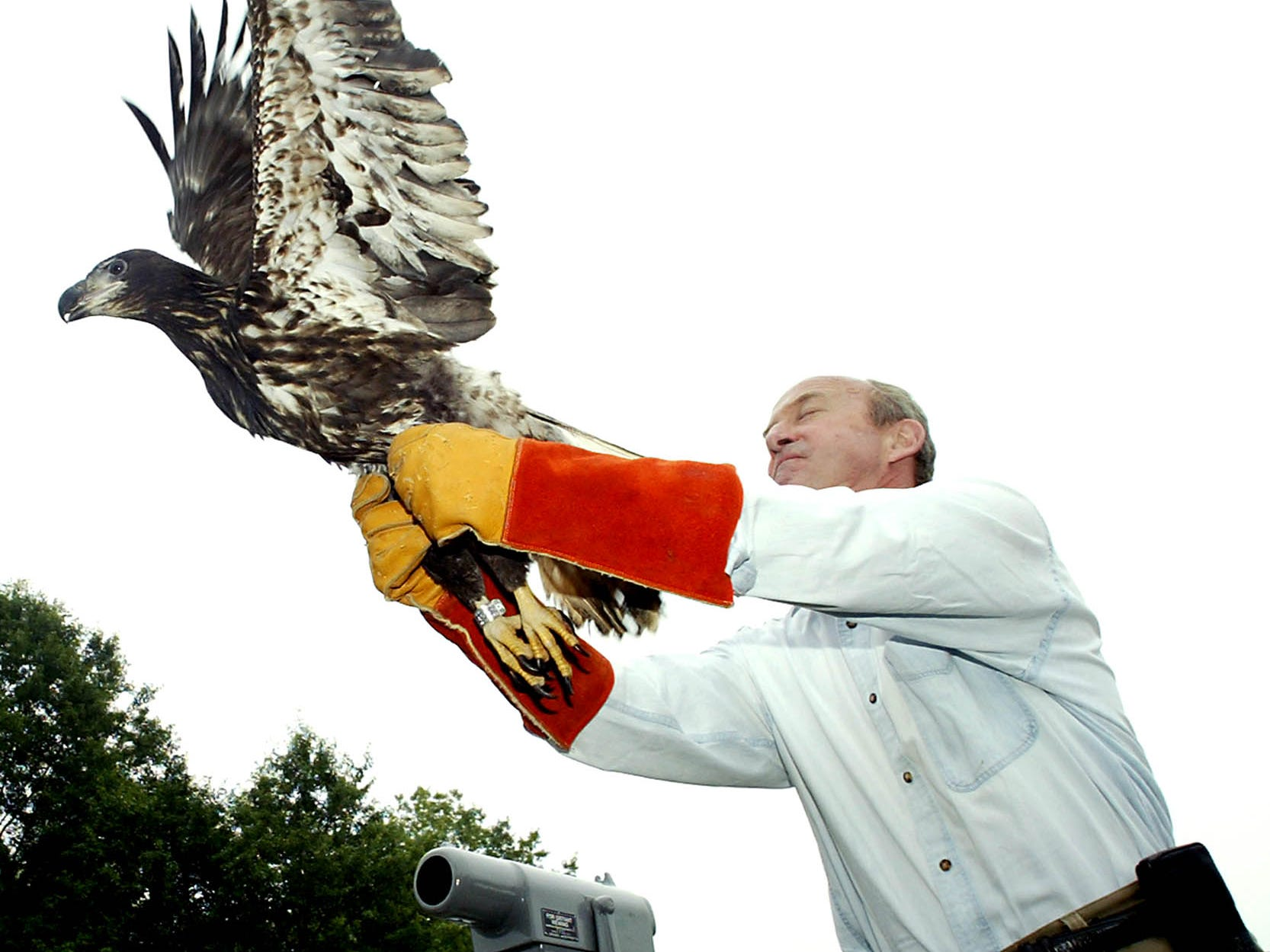 Millington--JULY 30, 2004--Congressman Rodney Frelinghuysen releases a two-year-old Bald Eagle that was rehabilitated at the Raptor Trust and set free at an overlook in the Great Swamp. 