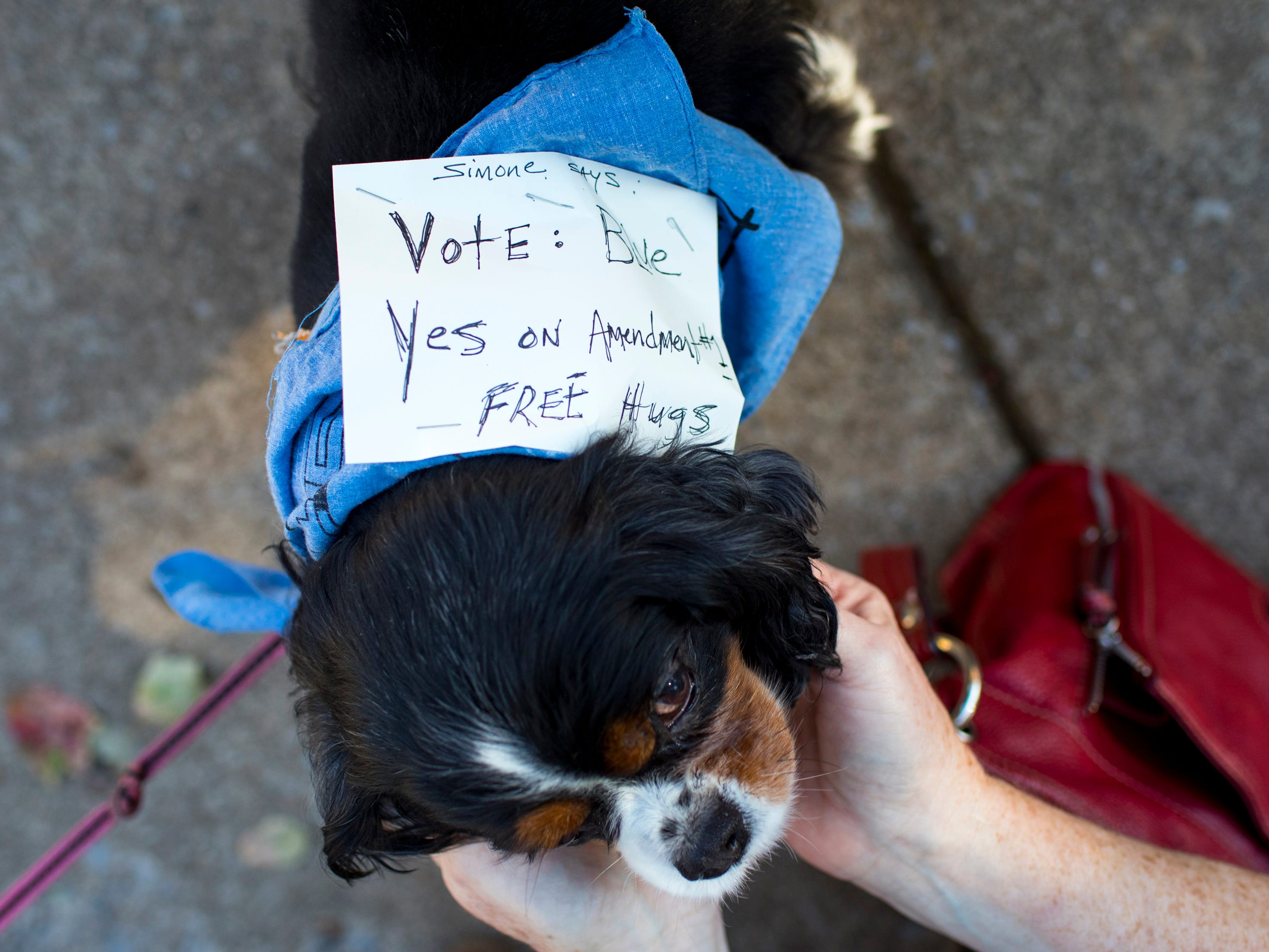 "Simone Secours wears a sign that says ""Simone says: vote blue, yes on Amendment #1, free hugs"" outside of the Shelby Park Community Center polling place in Nashville on Tuesday, Nov. 6, 2018. According to her owner Molly Secours, Simone is a ""blue dog democrat."""