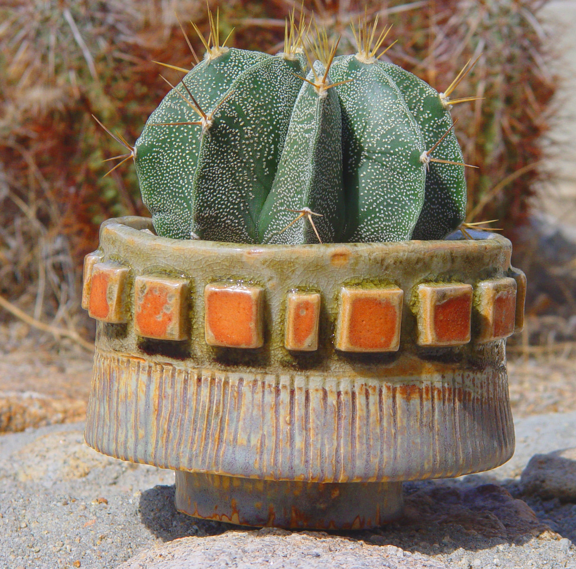 To turn a succulent into a living sculpture, add it to a one-of-a-kind pot