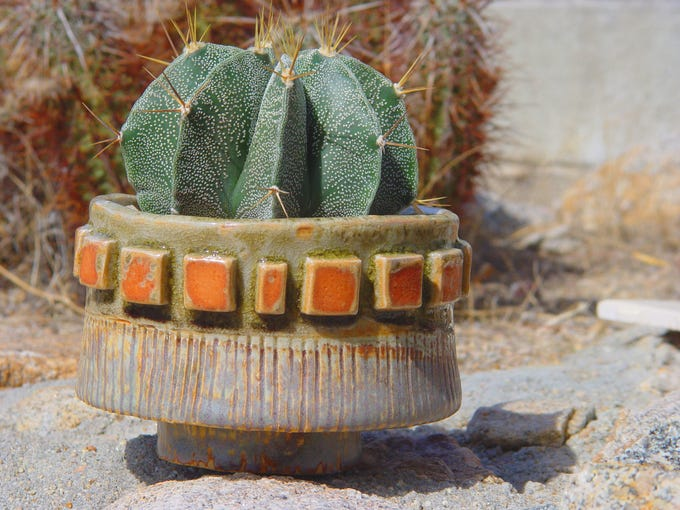Rustic, space age interest when you combine curious pots with Astrophytum cactus.