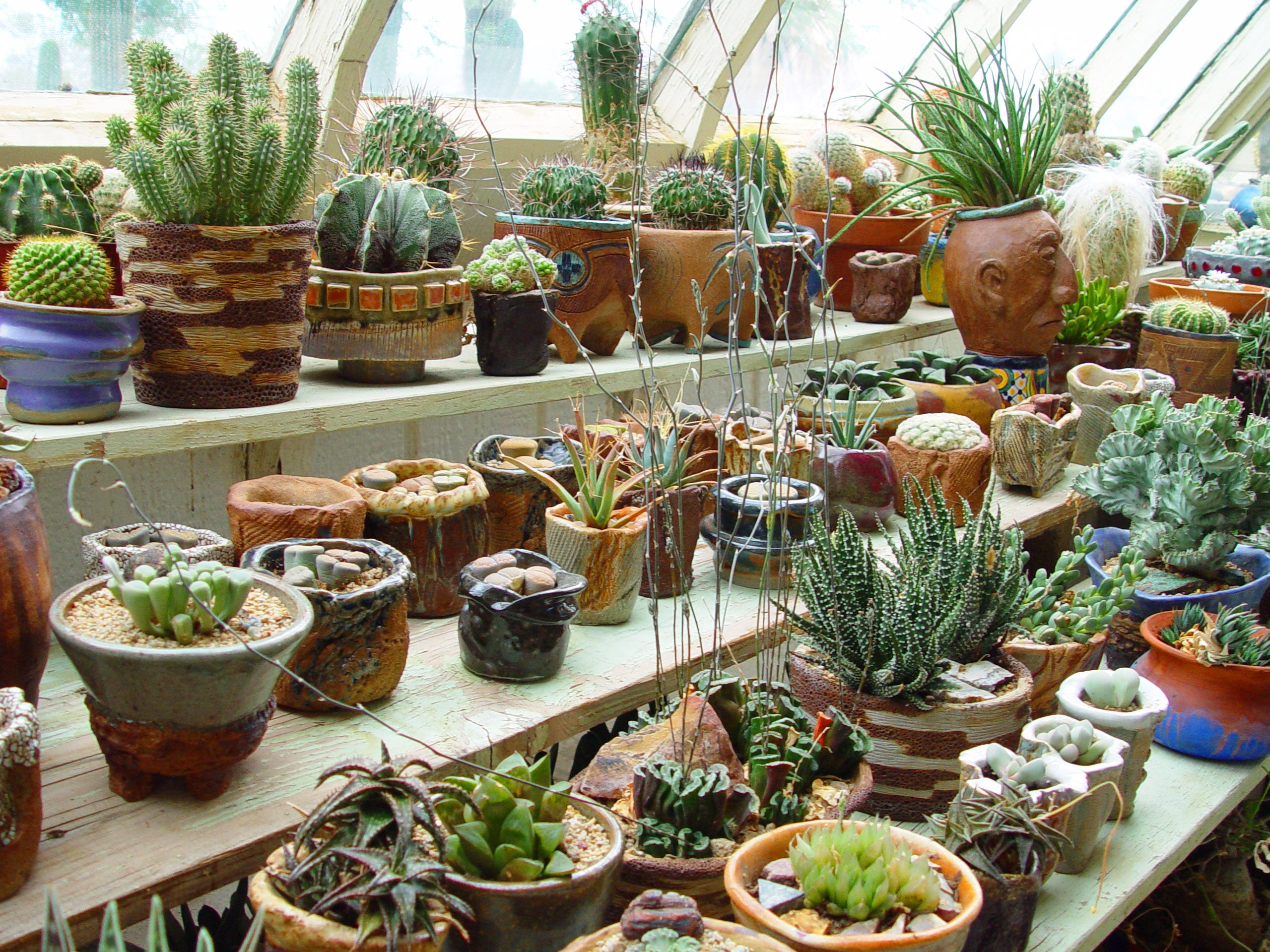 A collection of living sculptures in my Morongo dry greenhouse took many years to create.