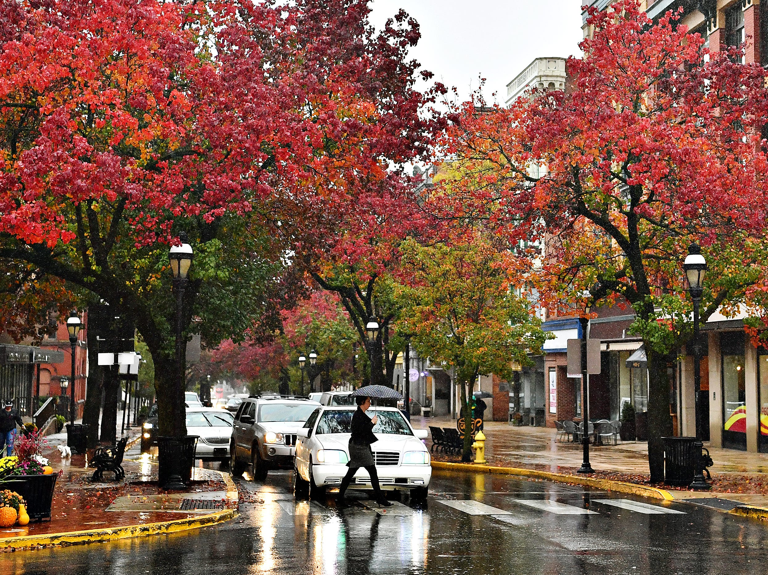Rain saturates fall colors along West Market Street in York City, Tuesday, Nov. 6, 2018. Dawn J. Sagert photo