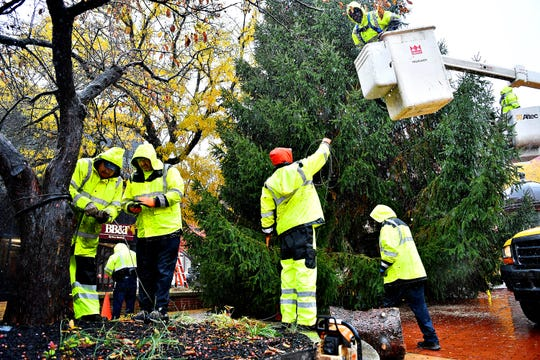 City of York employees work to secure the York Community Christmas Tree in Continental Square in York City, Tuesday, Nov. 6, 2018. Once decorated, the tree will be lit during the annual Light Up York ceremony to be held in the square amidst a day of family activities on Saturday, Dec. 1. Dawn J. Sagert photo