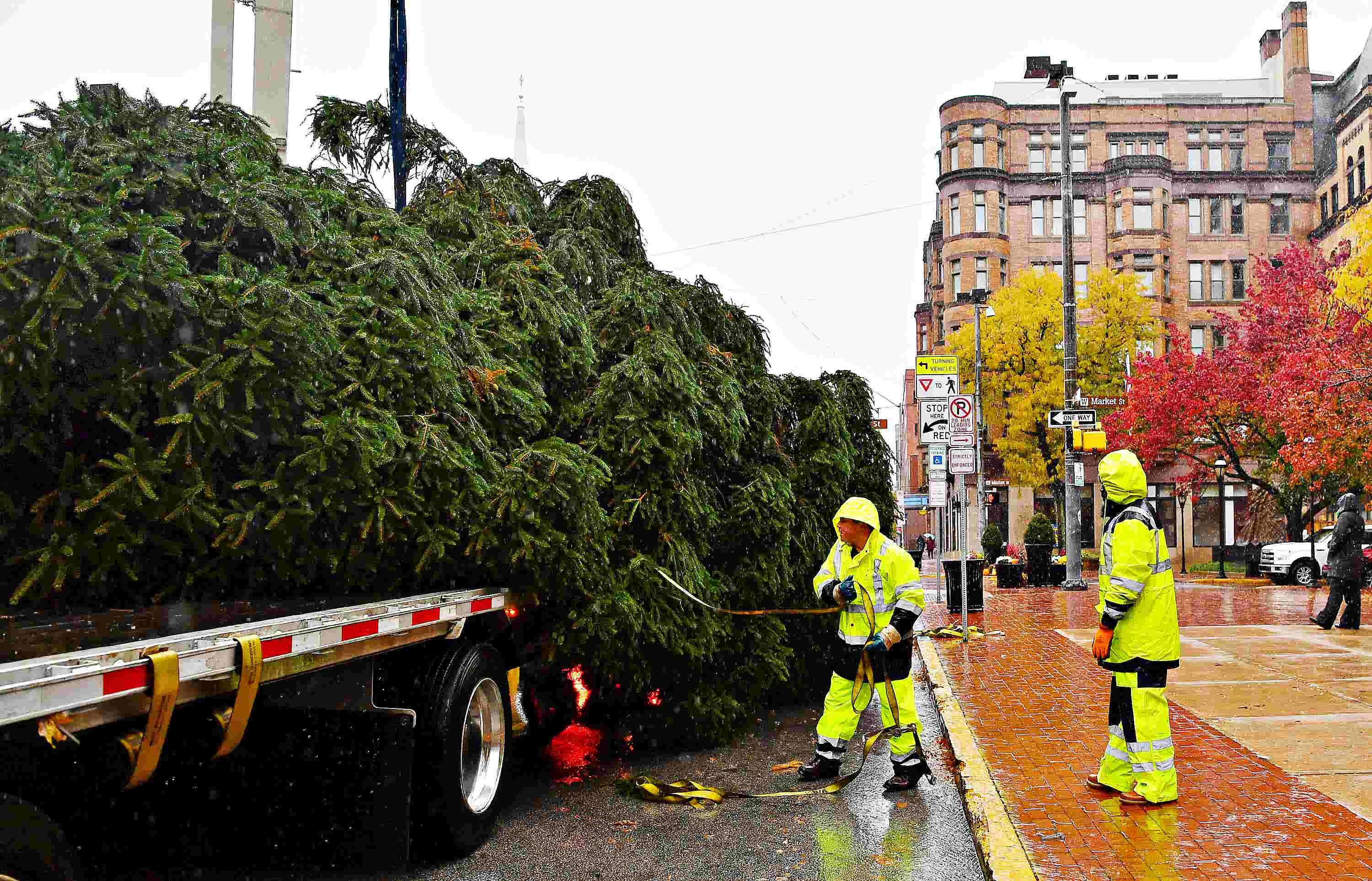 york city hauls 50 foot tree to continental square - How Long Can A Christmas Tree Last