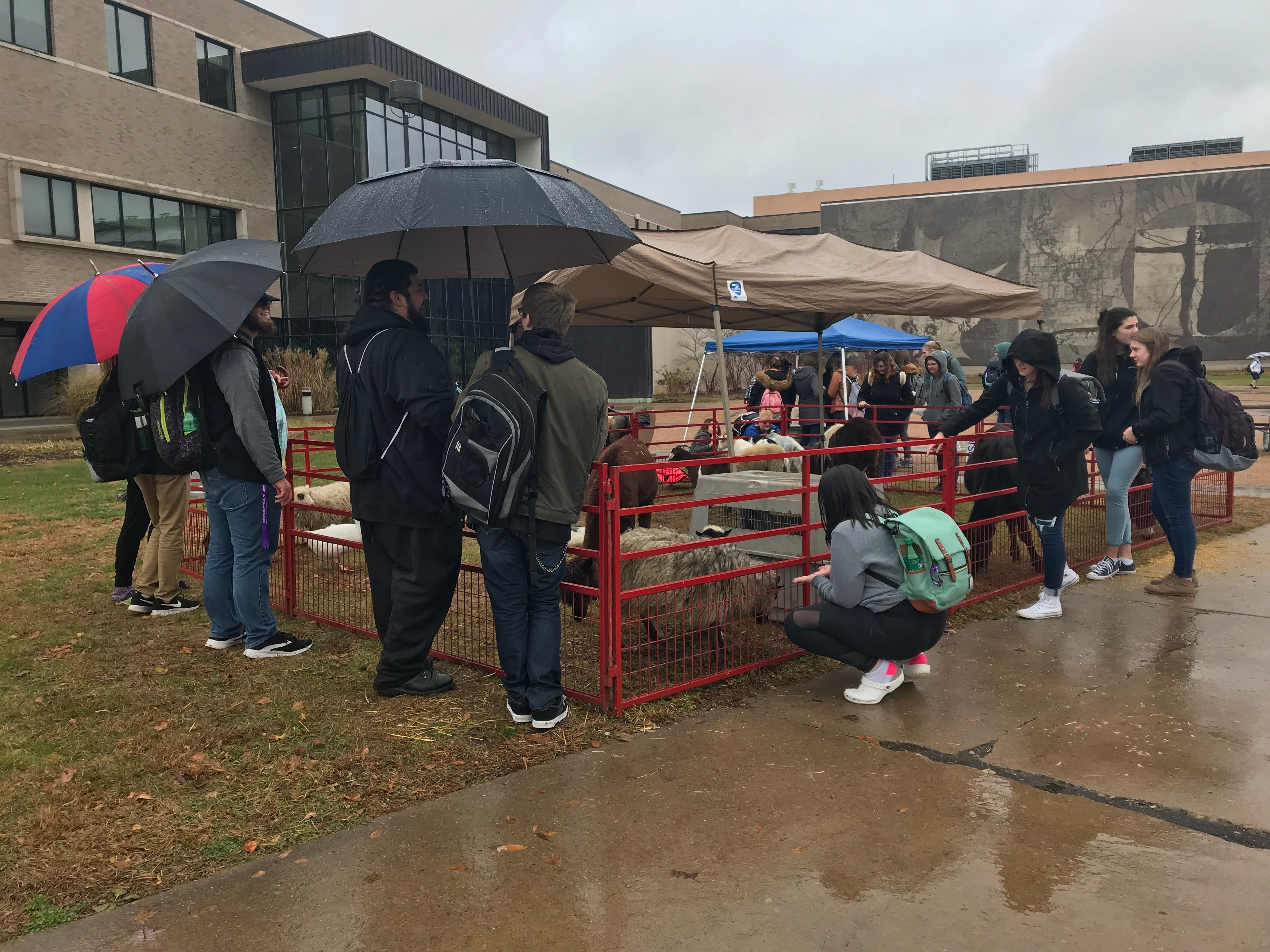 Groups of students gathered around a petting zoo set up at UWSP on Election Day.