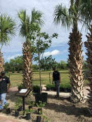 The Vero Beach Dog Park recently received some improvements including the planting of mature trees and flowers.