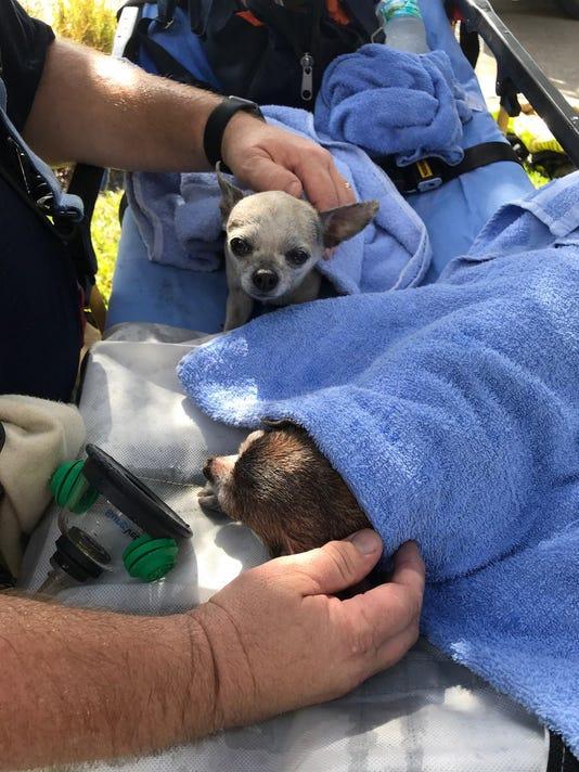 Mc Fire Saved Dogs 1106
