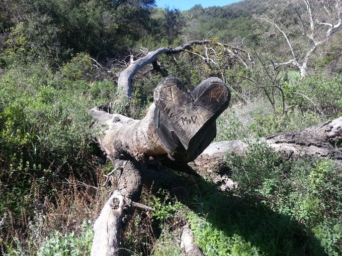 A heart-shaped tree stump serves as an inspirational spot on the Backbone Trail in 2015.